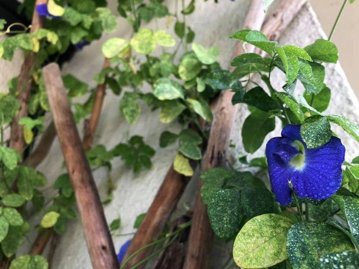 青い蝶々がたくさん♪